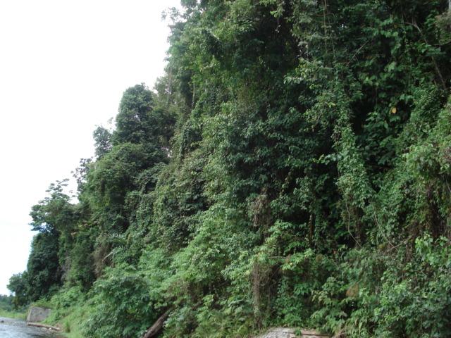 hutan-papua-heterogen.JPG