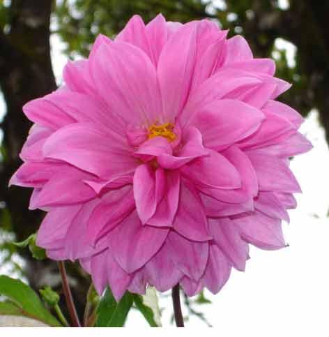 Nyatakan Cinta Dengan Bunga